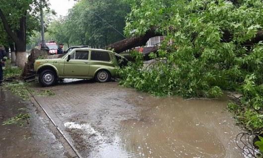Ураган, ливень иград вХмельницкой области: повалены 70 деревьев